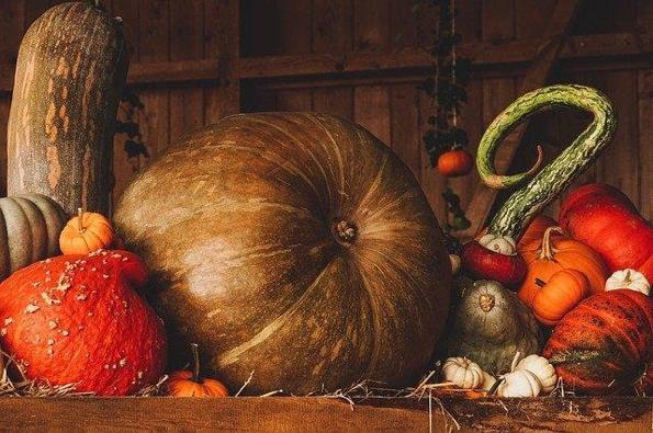 Photographie de légumes récoltés en automne
