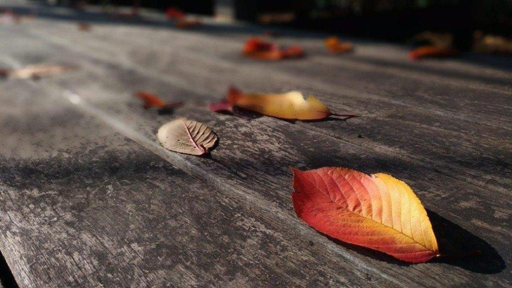 Feuilles d'automnes posées sur une table de jardin en bois